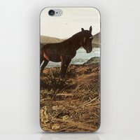 pony iPhone & iPod Skins featuring PONY by KELLY SCHIRMANN