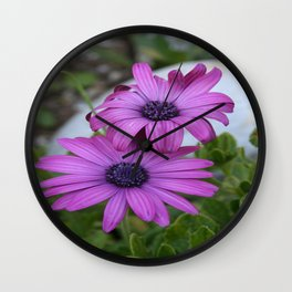 Purple and Pink African Daisy Flowers Wall Clock