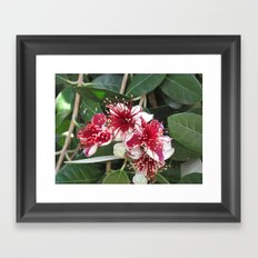 Fejoja bloom Framed Art Print