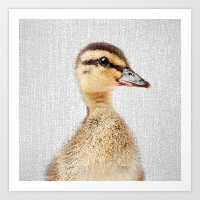 Duckling - Colorful Art Print