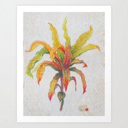 indian croton Art Print