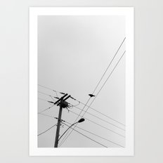 Crow on a Wire Art Print