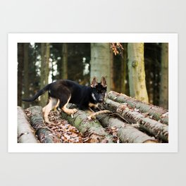 Cold snout playing in the forest Art Print