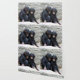 Chimpanzee 002 Wallpaper