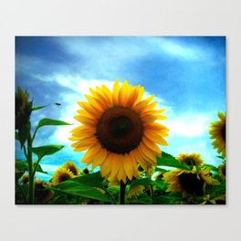 The sun will come out tomorrow Canvas Print