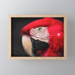 scarlet macaw - ara macao Framed Mini Art Print