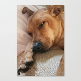 Dog Daze  Canvas Print
