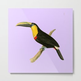 Doubtful Toucan Bird Illustration by William Swainson Metal Print