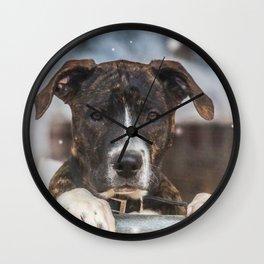Cute Mastiff Rottweiler Mix  Puppy Wall Clock
