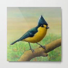 Yellow Tit Metal Print