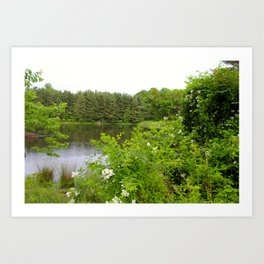 Wild Flowers on the lake Art Print
