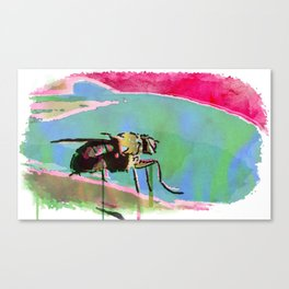 The Contemplation Of A Fly Canvas Print