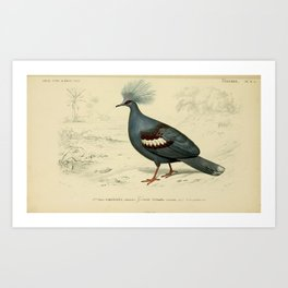 D'Orbigny - Universal Dictionary of Natural History; Birds (1849): 6A Western Crowned Pigeon Art Print