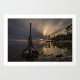 Colington Tree Stump Sunset Art Print