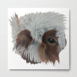 Guinea Pig ball of fluff Metal Print
