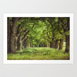 Oak Tree Alley Art Print