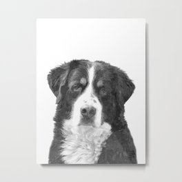 Black and White Bernese Mountain Dog Metal Print