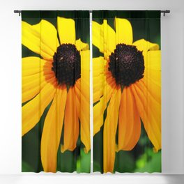Golden glow of a black-eyed Susan, Rudbeckia Blackout Curtain