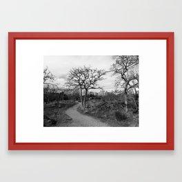 Path Through the Park Framed Art Print