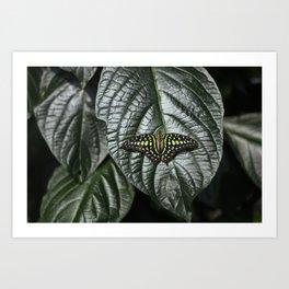 Butterfly 2 - Glowing in the Dark Art Print