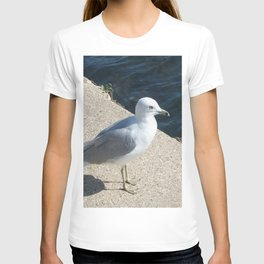 Seagull, Lake Michigan, Shoreline T-shirt