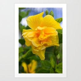 Double Yellow Hibiscus Art Print