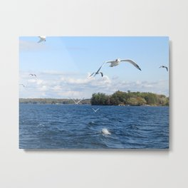 The Seagull Chase Metal Print