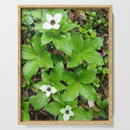 Canadian bunchberry Serving Tray