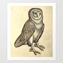 Antique Barn Owl Art Print