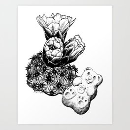 Pediocactus bradyi and gummy bear Art Print