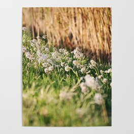 Spring nature Poster