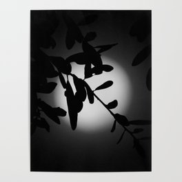 The Elegant Side of the Moon Poster