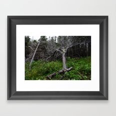 Forest Spirit (Full image skull and trunk)  Framed Art Print