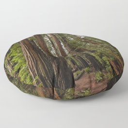 Redwood Forest Adventure VII - Nature Photography Floor Pillow