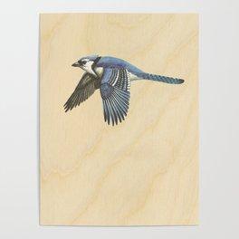 Vintage Blue Jay on Wood Poster