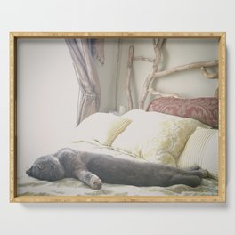 Beautiful gray Scottish Fold cat relaxing on a bed Serving Tray