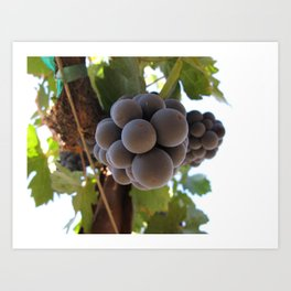 Grapes 2 Art Print