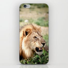 Alex the Lion - Namibia - TRAVEL PHOTOGRAPHY & LANDSCAPES iPhone Skin