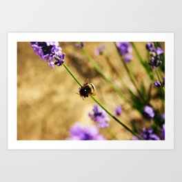 'Bumble Bee' by TDL Art Print