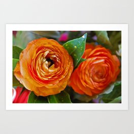 Orange Ranunculus Flowers 2 Art Print