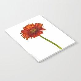 Gerbera Notebook