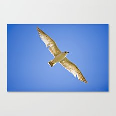 Eyes in the Sky Canvas Print