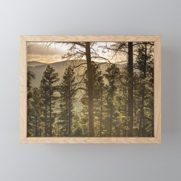 Mountain Forest New Mexico - Nature Photography Framed Mini Art Print