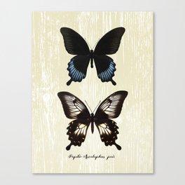Butterfly10_Papilio Ascalaphus pair Canvas Print