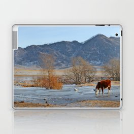 Cow drinking from a mountain stream from under ice in winter Laptop & iPad Skin