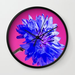 Blue fresh cornflower on the pink background Wall Clock