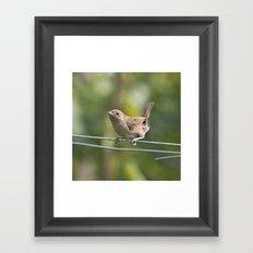 Mad Mama Wren Framed Art Print