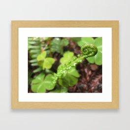 Unfurled Ferns Framed Art Print
