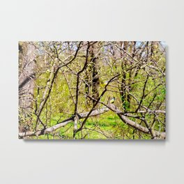 Tomtit Birds In The Forest On A Sunny Day Of Spring Metal Print