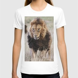 Lions in the grass at the Wild Animal Sanctuary near Keenesburg Colorado T-shirt